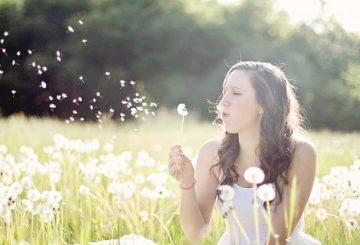 dandelions-609253__340
