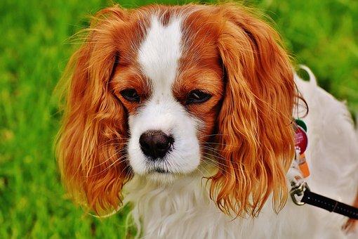 dog-1606600__340