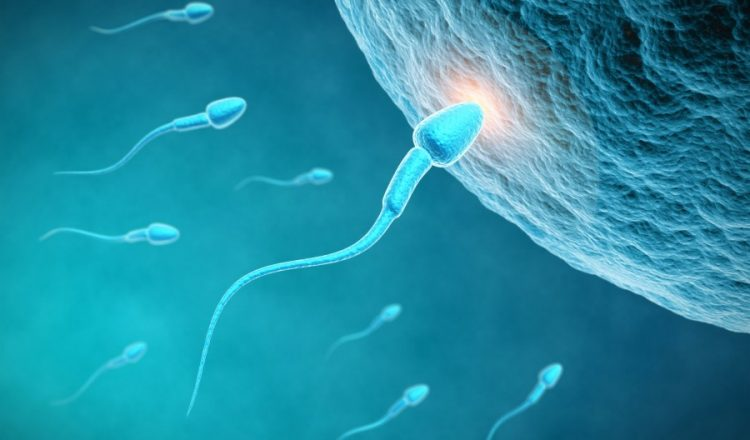 Espermios